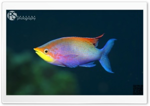 Fish HD Wide Wallpaper for Widescreen
