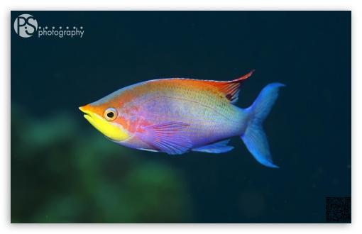 Fish ❤ 4K UHD Wallpaper for Wide 16:10 Widescreen WHXGA WQXGA WUXGA WXGA ;