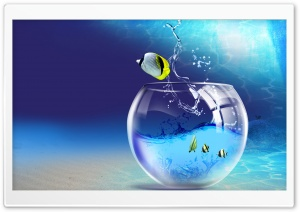 Fish Jumping Out Of Aquarium HD Wide Wallpaper for Widescreen