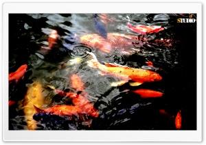 Fishy HD Wide Wallpaper for 4K UHD Widescreen desktop & smartphone