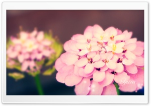 Fjura Ultra HD Wallpaper for 4K UHD Widescreen desktop, tablet & smartphone