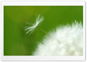 Flake Of Dandelion HD Wide Wallpaper for 4K UHD Widescreen desktop & smartphone