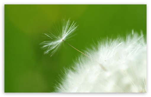 Flake Of Dandelion ❤ 4K UHD Wallpaper for Wide 16:10 5:3 Widescreen WHXGA WQXGA WUXGA WXGA WGA ; 4K UHD 16:9 Ultra High Definition 2160p 1440p 1080p 900p 720p ; Standard 4:3 5:4 3:2 Fullscreen UXGA XGA SVGA QSXGA SXGA DVGA HVGA HQVGA ( Apple PowerBook G4 iPhone 4 3G 3GS iPod Touch ) ; Tablet 1:1 ; iPad 1/2/Mini ; Mobile 4:3 5:3 3:2 16:9 5:4 - UXGA XGA SVGA WGA DVGA HVGA HQVGA ( Apple PowerBook G4 iPhone 4 3G 3GS iPod Touch ) 2160p 1440p 1080p 900p 720p QSXGA SXGA ;