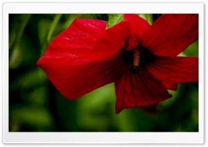 Flame Ultra HD Wallpaper for 4K UHD Widescreen desktop, tablet & smartphone