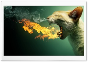 Flaming Cat HD Wide Wallpaper for Widescreen