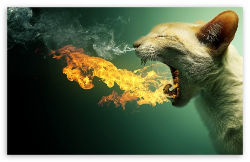 Flaming Cat HD wallpaper for Standard 4:3 5:4 Fullscreen UXGA XGA SVGA QSXGA SXGA ; Wide 16:10 5:3 Widescreen WHXGA WQXGA WUXGA WXGA WGA ; HD 16:9 High Definition WQHD QWXGA 1080p 900p 720p QHD nHD ; Other 3:2 DVGA HVGA HQVGA devices ( Apple PowerBook G4 iPhone 4 3G 3GS iPod Touch ) ; Mobile VGA WVGA iPhone iPad PSP Phone - VGA QVGA Smartphone ( PocketPC GPS iPod Zune BlackBerry HTC Samsung LG Nokia Eten Asus ) WVGA WQVGA Smartphone ( HTC Samsung Sony Ericsson LG Vertu MIO ) HVGA Smartphone ( Apple iPhone iPod BlackBerry HTC Samsung Nokia ) Sony PSP Zune HD Zen ; Tablet 2 Android 3 DVGA HVGA HQVGA devices ( Apple PowerBook G4 iPhone 4 3G 3GS iPod Touch ) ; Dual 5:4 QSXGA SXGA ;
