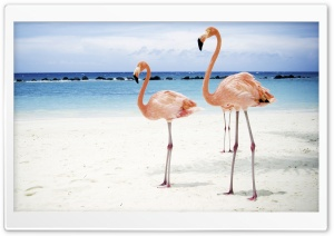 Flamingo HD Wide Wallpaper for 4K UHD Widescreen desktop & smartphone