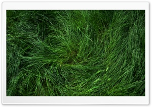 Flattened Grass HD Wide Wallpaper for 4K UHD Widescreen desktop & smartphone