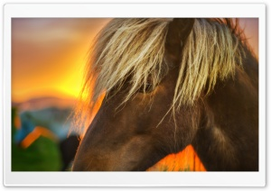 Flaxen Horse At Sunrise HD Wide Wallpaper for 4K UHD Widescreen desktop & smartphone