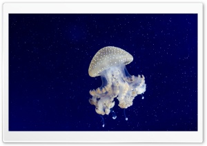 Floating Bell Jellyfish HD Wide Wallpaper for 4K UHD Widescreen desktop & smartphone
