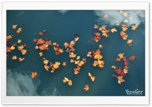Floating Leaves HD Wide Wallpaper for Widescreen