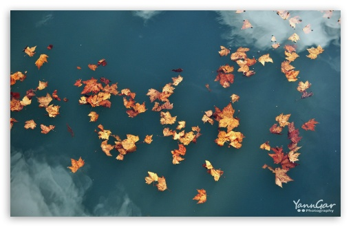 Floating Leaves ❤ 4K UHD Wallpaper for Wide 16:10 5:3 Widescreen WHXGA WQXGA WUXGA WXGA WGA ; Standard 4:3 5:4 3:2 Fullscreen UXGA XGA SVGA QSXGA SXGA DVGA HVGA HQVGA ( Apple PowerBook G4 iPhone 4 3G 3GS iPod Touch ) ; Tablet 1:1 ; iPad 1/2/Mini ; Mobile 4:3 5:3 3:2 16:9 5:4 - UXGA XGA SVGA WGA DVGA HVGA HQVGA ( Apple PowerBook G4 iPhone 4 3G 3GS iPod Touch ) 2160p 1440p 1080p 900p 720p QSXGA SXGA ;
