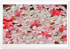 Floating Petals HD Wide Wallpaper for Widescreen
