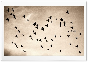 Flock HD Wide Wallpaper for Widescreen