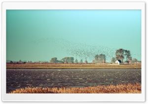 Flock of Birds, Fischland isthmus, Baltic Sea coast Ultra HD Wallpaper for 4K UHD Widescreen desktop, tablet & smartphone