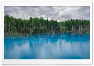 Flooded Forest HD Wide Wallpaper for Widescreen