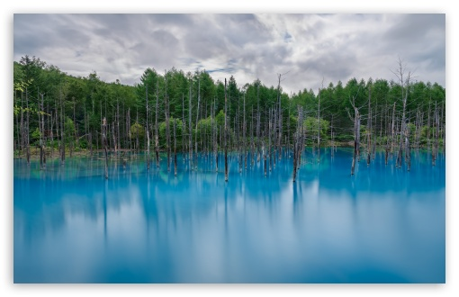 Flooded Forest HD wallpaper for Wide 16:10 5:3 Widescreen WHXGA WQXGA WUXGA WXGA WGA ; HD 16:9 High Definition WQHD QWXGA 1080p 900p 720p QHD nHD ; UHD 16:9 WQHD QWXGA 1080p 900p 720p QHD nHD ; Standard 4:3 5:4 3:2 Fullscreen UXGA XGA SVGA QSXGA SXGA DVGA HVGA HQVGA devices ( Apple PowerBook G4 iPhone 4 3G 3GS iPod Touch ) ; Smartphone 5:3 WGA ; Tablet 1:1 ; iPad 1/2/Mini ; Mobile 4:3 5:3 3:2 16:9 5:4 - UXGA XGA SVGA WGA DVGA HVGA HQVGA devices ( Apple PowerBook G4 iPhone 4 3G 3GS iPod Touch ) WQHD QWXGA 1080p 900p 720p QHD nHD QSXGA SXGA ; Dual 16:10 5:3 16:9 4:3 5:4 WHXGA WQXGA WUXGA WXGA WGA WQHD QWXGA 1080p 900p 720p QHD nHD UXGA XGA SVGA QSXGA SXGA ;