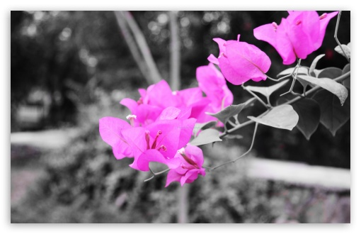 Wonderful Download Flora HD Wallpaper