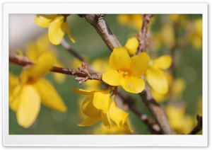 Floraison Ultra HD Wallpaper for 4K UHD Widescreen desktop, tablet & smartphone