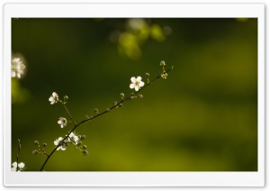 Flourished Branch HD Wide Wallpaper for Widescreen