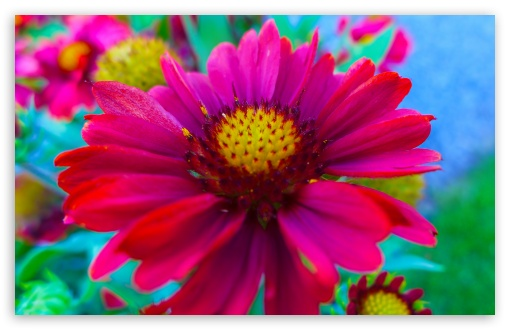 Flower 3 HD wallpaper for Standard 4:3 Fullscreen UXGA XGA SVGA ; Wide ...