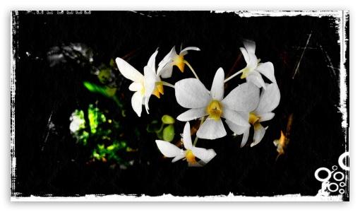 Flower HD wallpaper for HD 16:9 High Definition WQHD QWXGA 1080p 900p 720p QHD nHD ; Mobile 16:9 - WQHD QWXGA 1080p 900p 720p QHD nHD ;