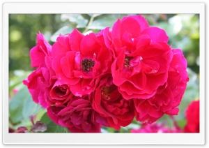 Flower HD Wide Wallpaper for 4K UHD Widescreen desktop & smartphone