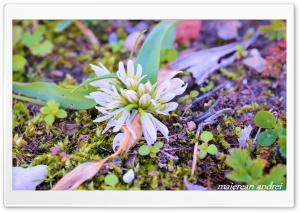 Flower HD Wide Wallpaper for Widescreen