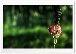 Flower 3 HD Wide Wallpaper for Widescreen