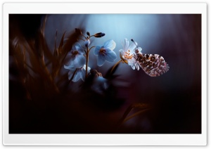 Flower - Butterfly HD Wide Wallpaper for Widescreen