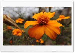 Flower - Peyman Jari Ultra HD Wallpaper for 4K UHD Widescreen desktop, tablet & smartphone