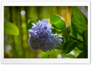 Flower - Violet HD Wide Wallpaper for Widescreen
