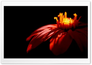 Flower   Dark HD Wide Wallpaper for Widescreen