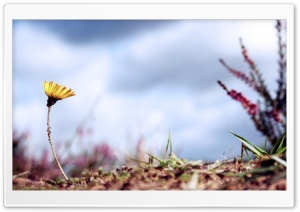 Flower and Ants HD Wide Wallpaper for 4K UHD Widescreen desktop & smartphone