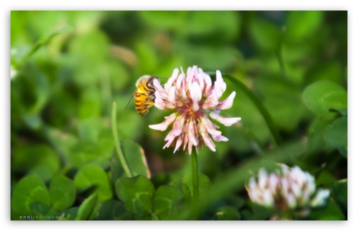 Download Flower And Bee HD Wallpaper