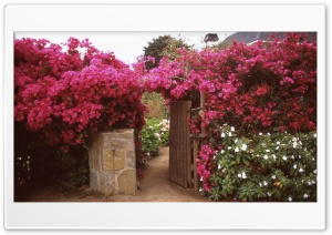 Flower Arch Gate HD Wide Wallpaper for Widescreen