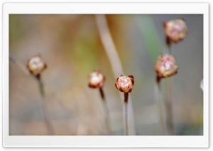 Flower Balls Ultra HD Wallpaper for 4K UHD Widescreen desktop, tablet & smartphone