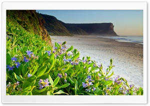 Flower Beach HD Wide Wallpaper for Widescreen