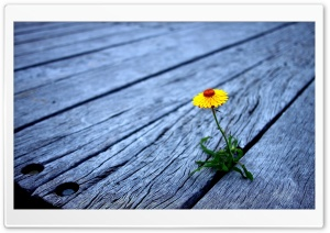 Flower Between Wooden Boards HD Wide Wallpaper for Widescreen