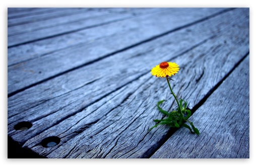 Flower Between Wooden Boards HD wallpaper for Wide 16:10 5:3 Widescreen WHXGA WQXGA WUXGA WXGA WGA ; HD 16:9 High Definition WQHD QWXGA 1080p 900p 720p QHD nHD ; Standard 4:3 5:4 3:2 Fullscreen UXGA XGA SVGA QSXGA SXGA DVGA HVGA HQVGA devices ( Apple PowerBook G4 iPhone 4 3G 3GS iPod Touch ) ; Tablet 1:1 ; iPad 1/2/Mini ; Mobile 4:3 5:3 3:2 16:9 5:4 - UXGA XGA SVGA WGA DVGA HVGA HQVGA devices ( Apple PowerBook G4 iPhone 4 3G 3GS iPod Touch ) WQHD QWXGA 1080p 900p 720p QHD nHD QSXGA SXGA ; Dual 4:3 5:4 UXGA XGA SVGA QSXGA SXGA ;