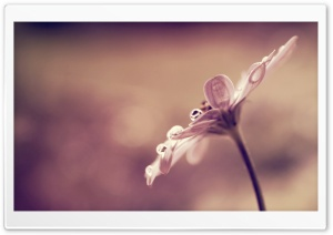 Flower Bokeh HD Wide Wallpaper for Widescreen