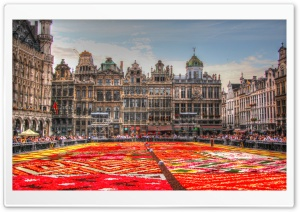 Flower Carpet - Grand Place - Brussels, Belgium HD Wide Wallpaper for Widescreen