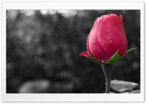 Flower Colour Splash HD Wide Wallpaper for 4K UHD Widescreen desktop & smartphone