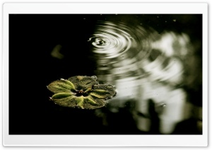 Flower Floating On The Water HD Wide Wallpaper for Widescreen