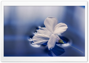 Flower Floating On Water HD Wide Wallpaper for Widescreen