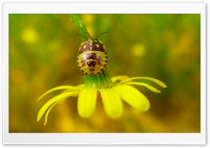 Flower Insect HD Wide Wallpaper for Widescreen