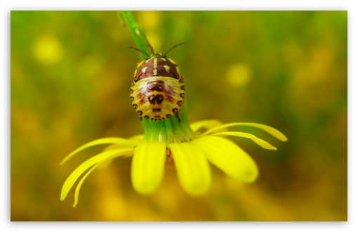 Flower Insect HD wallpaper for Wide 16:10 5:3 Widescreen WHXGA WQXGA WUXGA WXGA WGA ; HD 16:9 High Definition WQHD QWXGA 1080p 900p 720p QHD nHD ; Standard 4:3 5:4 3:2 Fullscreen UXGA XGA SVGA QSXGA SXGA DVGA HVGA HQVGA devices ( Apple PowerBook G4 iPhone 4 3G 3GS iPod Touch ) ; Tablet 1:1 ; iPad 1/2/Mini ; Mobile 4:3 5:3 3:2 16:9 5:4 - UXGA XGA SVGA WGA DVGA HVGA HQVGA devices ( Apple PowerBook G4 iPhone 4 3G 3GS iPod Touch ) WQHD QWXGA 1080p 900p 720p QHD nHD QSXGA SXGA ; Dual 16:10 5:3 16:9 4:3 5:4 WHXGA WQXGA WUXGA WXGA WGA WQHD QWXGA 1080p 900p 720p QHD nHD UXGA XGA SVGA QSXGA SXGA ;