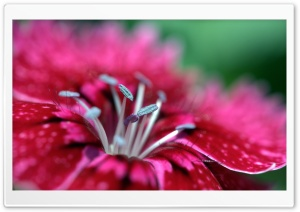 Flower Macro HD Wide Wallpaper for Widescreen
