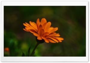 Flower of the Day Ultra HD Wallpaper for 4K UHD Widescreen desktop, tablet & smartphone