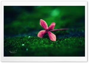 Flower on Grass HD Wide Wallpaper for Widescreen